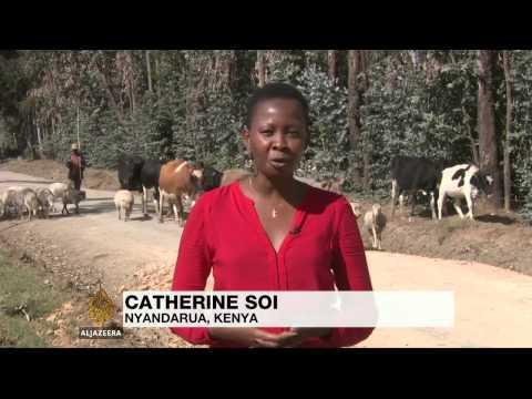 Mobile banking helps Kenyan farmers