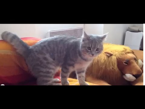 Katt visar upp lite ninjamoves