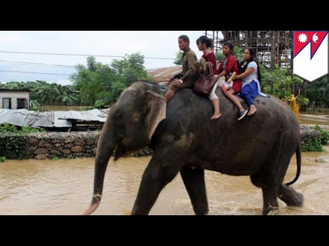 Elephant rescue: 600 tourists stranded in Nepal get rescued by elephants - TomoNews (видео)