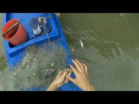 Thả lưới bén trên sông bắt được ổ cá rô biển ở miền tây