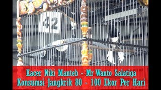 Download Video SUARA BURUNG - Jangkrik 80 - 100 Ekor Perhari Bikin Kacer Niki Manteb Buka Ekor, Nembak - Ngeroll MP3 3GP MP4