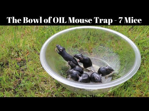 Turns out you just need a bowl with some peanut oil to catch mice