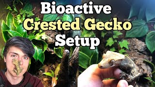 How To Setup a Bioactive Enclosure for a Crested Gecko! by Tyler Rugge