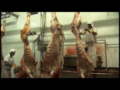China, Egito e Chile retomam importação da carne brasileira