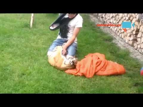 Mazlení se s tygříkem