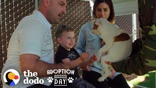 This Pittie Was Pregnant In A Shelter When She Found The Best Family  | The Dodo Adoption Day by The Dodo