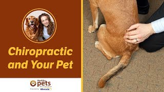 Chiropractic and Your Pet