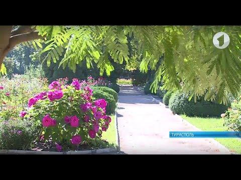 Новый ландшафт и водоём. Как изменится ботанический сад - DomaVideo.Ru