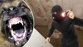 Video Anjing VS perampok; darah perampok berceceran di sekitar rumah ketika pemiliknya pulang - TomoNews MP3, 3GP, MP4, WEBM, AVI, FLV Oktober 2018