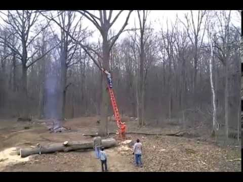 Tree takes revenge on guy chopping down the tree by throwing him