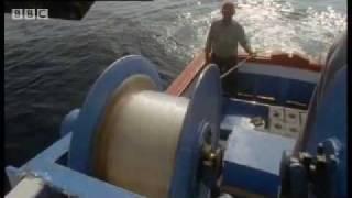 Download Video Giant Blue-Finned Tuna - Killer Whale -  BBC Animals MP3 3GP MP4