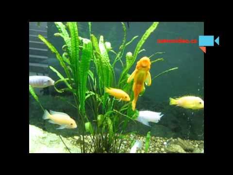 Akvarijní rybičky lázně Berta Třeboň