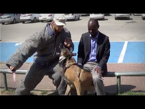 Video Highly Trained Knife Attack Prevention K9 Dog download in MP3, 3GP, MP4, WEBM, AVI, FLV January 2017