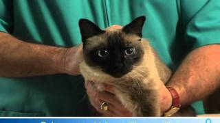 Willard Vet Tutorial: How to administer eye drops for your cat