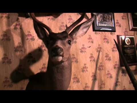 Testa's Taxidermy Tips – deer pick up.