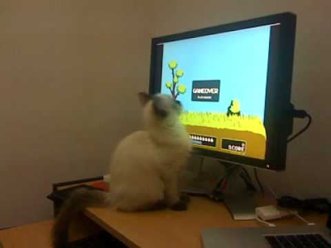 Cat Plays Duck Hunt.