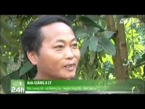 Sơn La: Đảm bảo an toàn lưới điện trong mùa mưa lũ