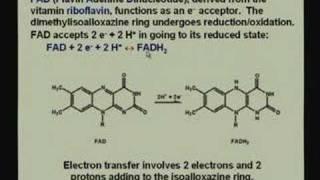 Lecture - 23 Bioenergetics 1