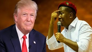 Video Julius Malema Responds To Donald Trump's Veiled Threats At South Africa MP3, 3GP, MP4, WEBM, AVI, FLV Oktober 2018