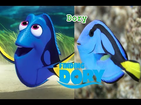 Finding Dory in Real Life - All Characters 2018 - OMG Kids