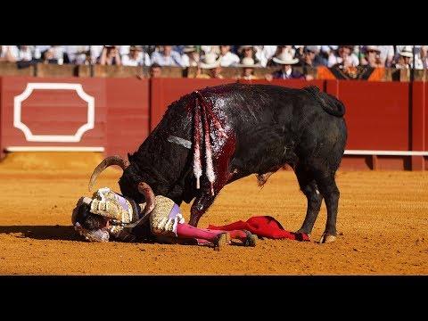 Mallorca: Der blutige Stierkampf ist wieder erlaubt - ...