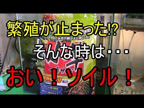【アクアリウム】シャドーシュリンプ水槽に追いソイル!