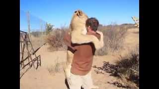 Video Milujte tak ako tento lev svojho majiteľa MP3, 3GP, MP4, WEBM, AVI, FLV Oktober 2017