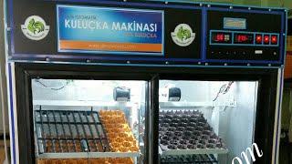 Buzdolabından El yapımı 1000 yumurtalık full otomatik kuluçka makinası  yclkuluçka yücel ışık www.denizlihorozu.com