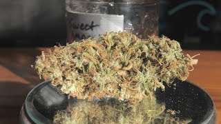 Sweet Amnesia Marijuana Monday by Urban Grower