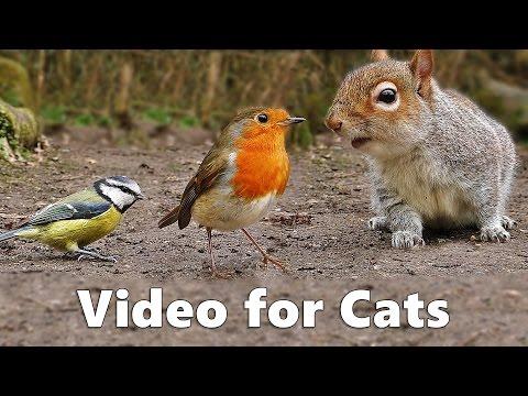 cats hack apk download ios