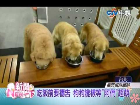 【中視新聞NEW一下】飯前要禱告 狗狗饞樣等阿們超萌