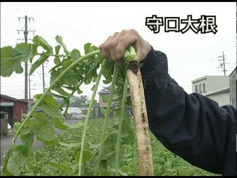 野菜中継 愛知県扶桑町 世界一の「守口大根」MoriguchiRadish