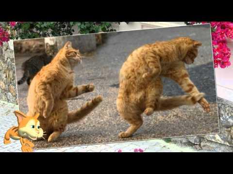 1 Марта   День кошек!