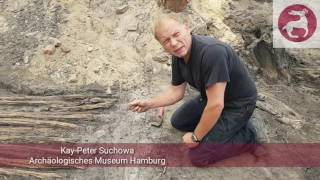 Muscheln in Hamburg: Ausgegraben - Harburger Schloßstraße