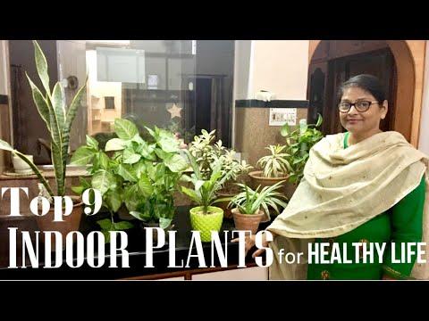 Indoor Plants for BEDROOM,BALCONY, HELPS BETTER SLEEP&PURIFIES AIR (видео)