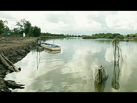 Mangroves & Markets: protecting the ecosystem
