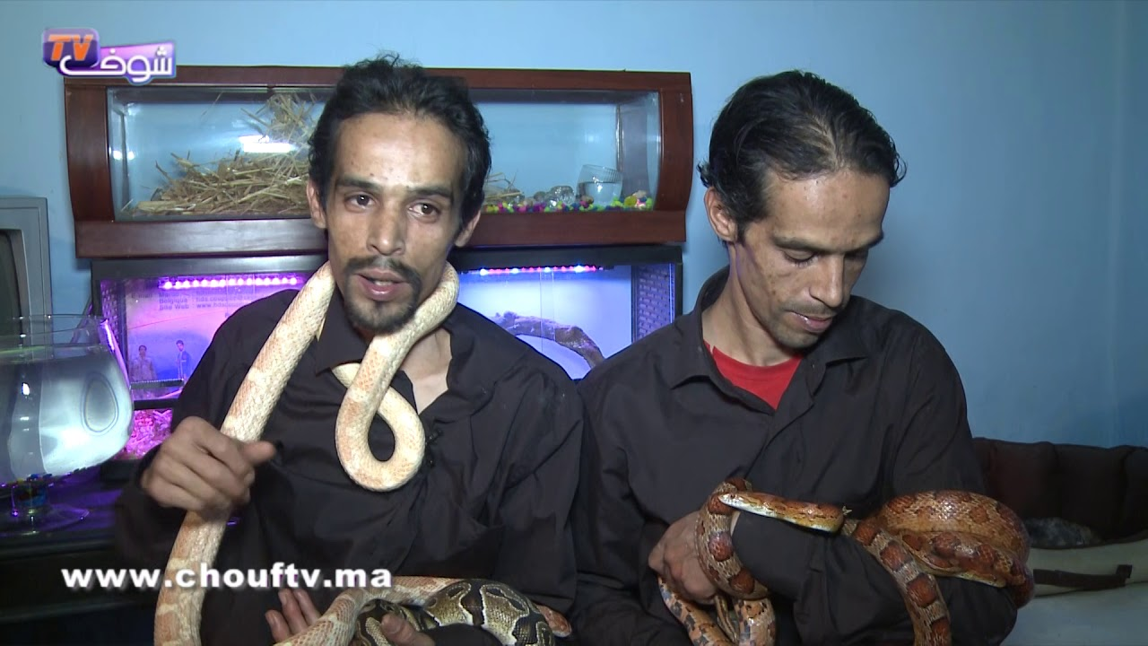 أنا و صاحبي الحيوان..توأم مربيين جميع أنواع الثعابين..شوفو كيفاش كيوكلوهم وهاكيفاش كايتوالدو | أنا و صاحبي الحيوان