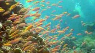 Pemba North Tanzania  City new picture : Scuba Diving off Pemba Island, Tanzania