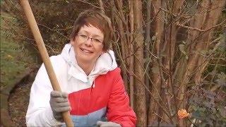Bokor rózsa őszi felkupacolása és tavaszi kitakarása - Kertbarátok - Kertészeti TV - műsor