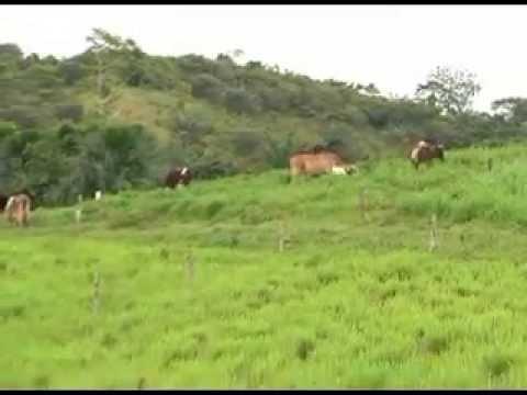 Governo investe em bacia leiteira do Juruá