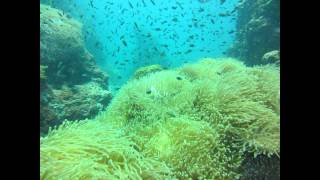 Diving Thailand Koh Phangan - Sail Rock Best Diving Video Ever