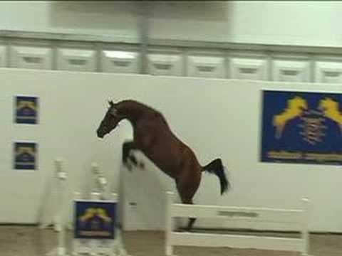 devinette - il cavallo dotato d' ali