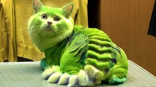 Video 10 MOST DANGEROUS CAT BREEDS IN THE WORLD MP3, 3GP, MP4, WEBM, AVI, FLV Agustus 2019