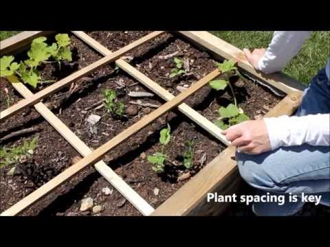 What is Square Foot Gardening?  A Brief Overview