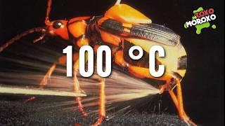 10 Animales Con Superpoderes Reales | Listas DetoxoMoroxo