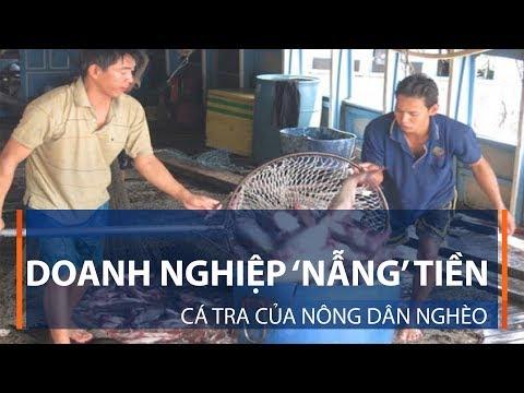 Doanh nghiệp 'nẫng' tiền cá tra của nông dân nghèo | VTC1 - Thời lượng: 3 phút, 12 giây.