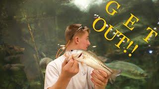 Video Fishing In Bass Pro Shops MP3, 3GP, MP4, WEBM, AVI, FLV Oktober 2018