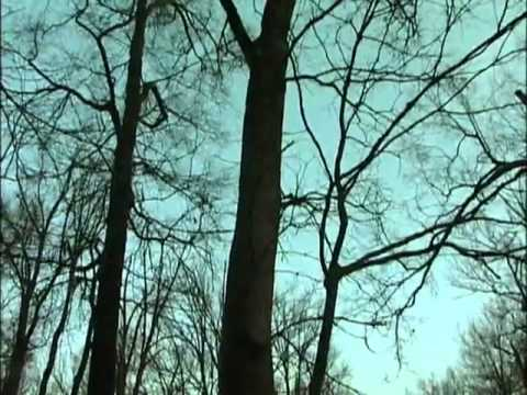 Smoking 7 Limits of Mallards  Cherokee Sports   Featherlite Decoys and Rusty Creasey