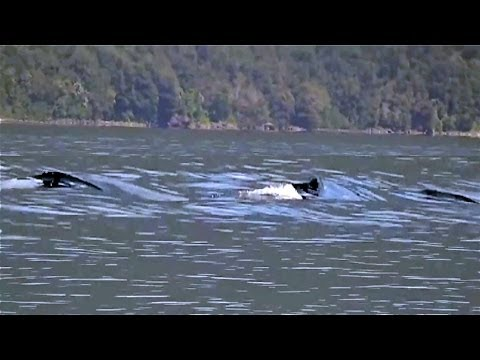 video incredibile! il mostro di loch ness esiste davvero!