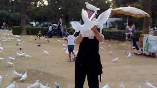 Севилья, парк Марии-Луизы, кормим голубей.